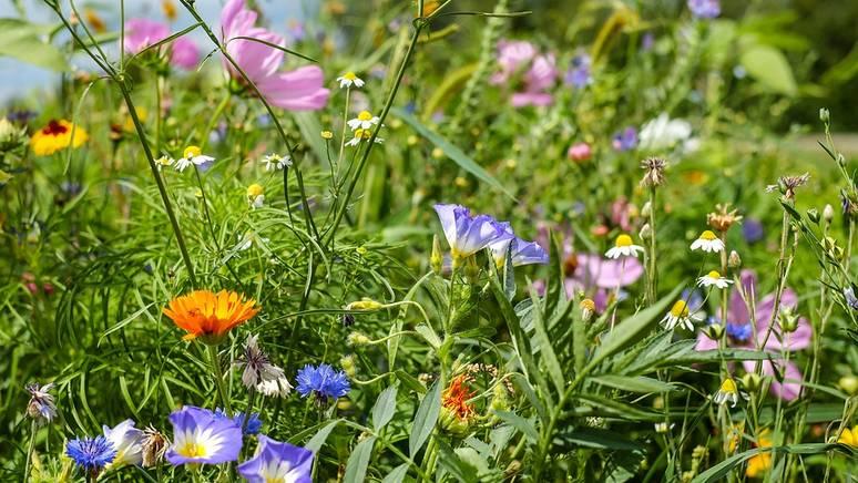 Garten und Kompostierung Angelika Ertl